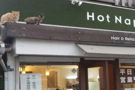 招き猫??